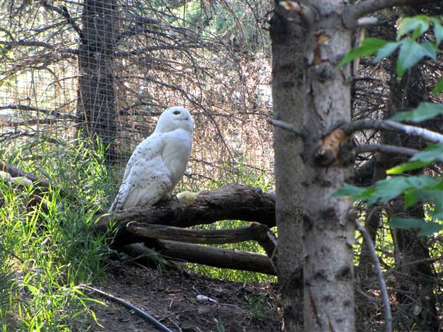 19_Owl