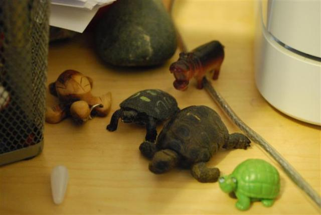 office3-turtles (Small)